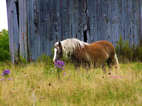 horse looking at flowers