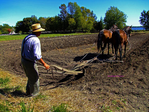 man plowing fled with horses